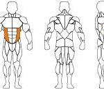 rotary torso-technogem-t3eenmrf14h-1